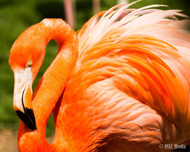 Big Exotic Bird